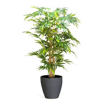 Bamboo tree, 1500 mm, inc. black pot