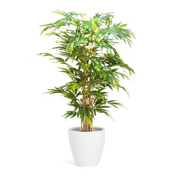 #en Bamboo tree, 150 cm, incl. white pot