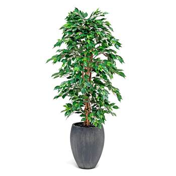 Synthetic Ficus plant with pot