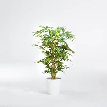 Bambuträd