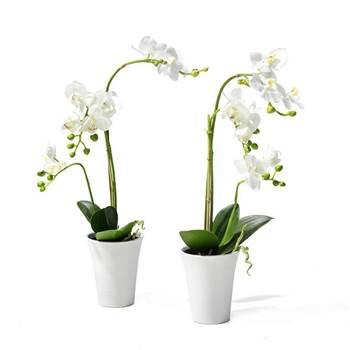 2 x Orchids
